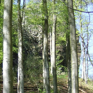 Naturpark Habichtswald_Hohlestein