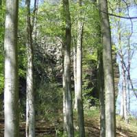 Naturpark Habichtswald Hohlestein2 e1530786417786 Mystischer Hohler Stein Botanische Exkursionen rund um Zierenberg
