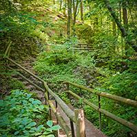 Naturpark Habichtswald_Horst Siebert_Firnsbachtal