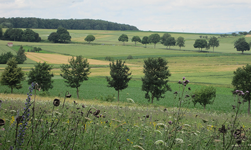 Naturpark Habichtswald IDippel H1 Frühjahrswanderung auf dem Habichtswaldsteig: Auf der Extratour H1 zum Streuobstpfad Niederlistingen