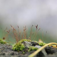Naturpark Habichtswald_Joerg Dreismann_kleine Wunder2