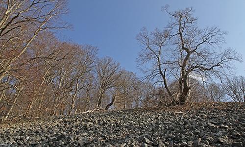 Naturpark Habichtswald Karner Blaue Steine Entdeckertage Nordhessen: Wanderung auf den Großen Schreckenberg
