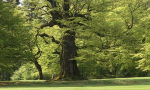 Naturpark Habichtswald_Karner_Golfbuche