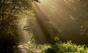 Naturpark Habichtswald_Karner_Sonnenstrahlen