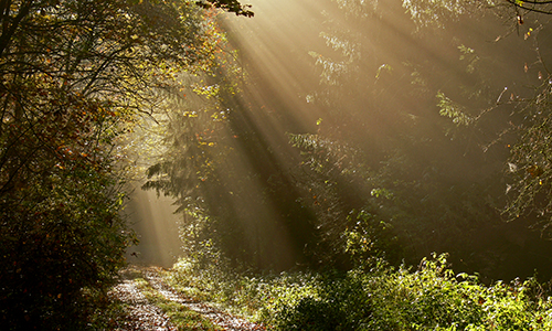 Naturpark Habichtswald Karner Sonnenstrahlen Die Strahlen der Sonne
