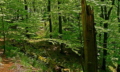 "Naturpark Habichtswald Karner Wald Totholz Das ""landschaftliche Auge"" des Waldes"