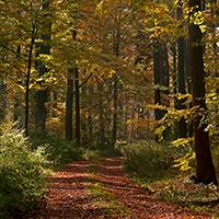 Naturpark Habichtswald LKarner Herbstwald Weg Heinrich von Meysenbug   Spaziergang auf den Spuren eines romantischen Lebemannes