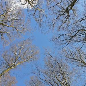 Naturpark Habichtswald_Ludwig Karner_Bäume im Winter