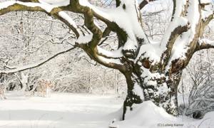 Naturpark Habichtswald_Ludwig Karner_Baum im Schnee