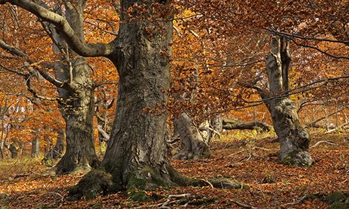 Naturpark Habichtswald Ludwig Karner Herbstwald Herbstliche Wald , Wiesen  und Steinwanderung zum Großen Schreckenberg