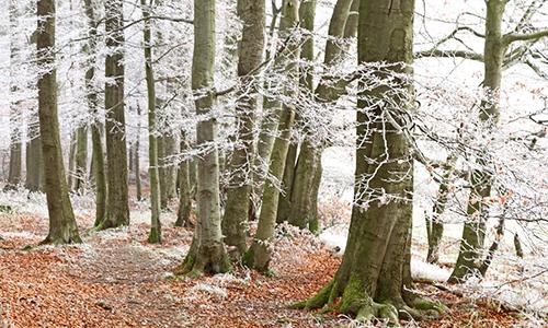 Naturpark Habichtswald Ludwig Karner Wald mit Schnee Geführte Wanderung zum Jahresende 2013: Im Tal der zwei Burgen – Wanderung auf dem H8 rund um Naumburg