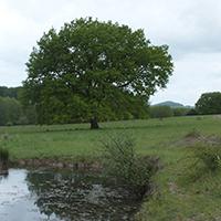 Naturpark Habichtswald_NABU_Seilerberg
