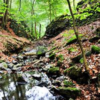 Naturpark Habichtswald_OHartmann_Firnsbachtal
