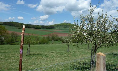 Naturpark Habichtswald OttoHartmann H8 Weidelsburgblick Im Tal der zwei Burgen – Wanderung auf dem H8 rund um Naumburg