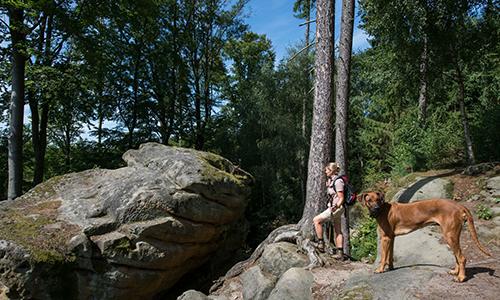 Naturpark Habichtswald PBlåfield Riesensteine Tageswanderung im Chattengau