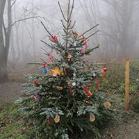 Naturpark Habichtswald_Paula Wallbrecht_Weihanchtsbaum