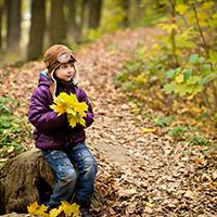 Naturpark Habichtswald_Pixabay_Abenteuer Herbstwald