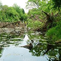 Naturpark Habichtswald_Pixabay_Aue