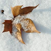 Naturpark Habichtswald_Pixabay_Blatt im Schnee