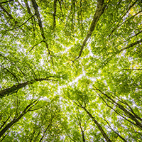 Naturpark Habichtswald_Pixabay_Blick zur Baumkrone