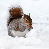 Naturpark Habichtswald Pixabay Eichhörchen Winter Ausstellung: Ganz schön Ausgeschlafen!