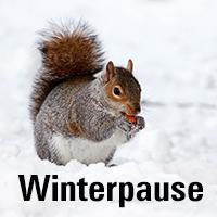 Naturpark Habichtswald_Pixabay_Eichhörchen Winterpause