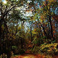 Naturpark Habichtswald_Pixabay_Herbstwald