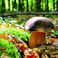 Naturpark Habichtswald_Pixabay_Pilze