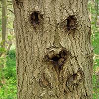 Naturpark Habichtswald_Pixabay_Waldgeist