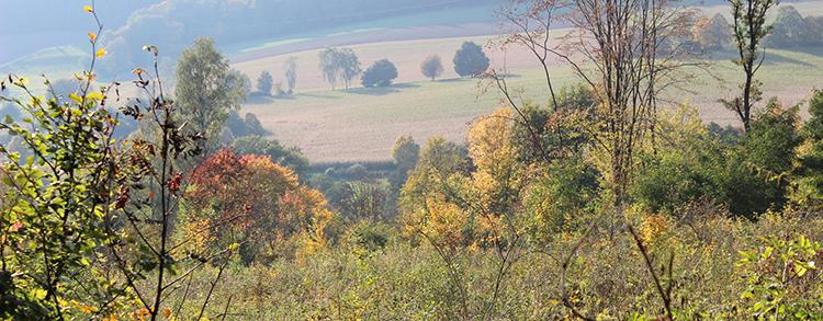 Naturpark Habichtswald Schwarzer 2013 EcoPfadFriedenspädagogik Eco Pfad Friedenspädagogik Bad Emstal   Geführte Wanderung