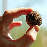 Naturpark Habichtswald_Seedballs