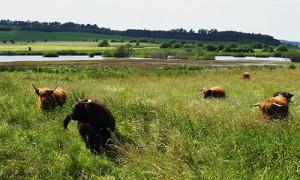 Naturpark Habichtswald_Stepfan Schmidt_Feutgebiet Bruchwiesen