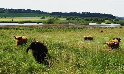 Naturpark Habichtswald Stepfan Schmidt Feutgebiet Bruchwiesen Das Feuchtgebiet Bruchwiesen und die Jungen Riesen des Landkreises