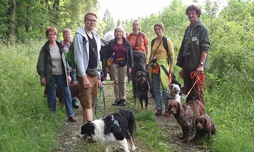 Naturpark Habichtswald UHartmann 2014 Hundewanderung Wandern mit dem besten Freund des Menschen: Um den Braunsberg