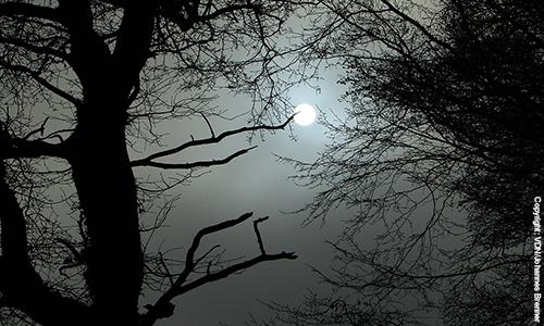 Naturpark Habichtswald VDN Johannes Brenner vollmond Nachtwanderung bei Vollmond unter bizarren Basaltfelsen, alten Baumveteranen und urigen Schluchten im südliche Habichtswald