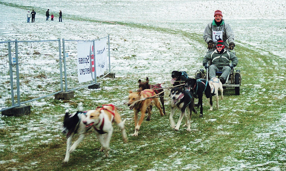 Naturpark Habichtswald Voss Schlittenhunde Gespann Schlittenhunde Rennen auf dem Dörnberg