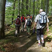 Naturpark Habichtswald_Wanderer im Wald