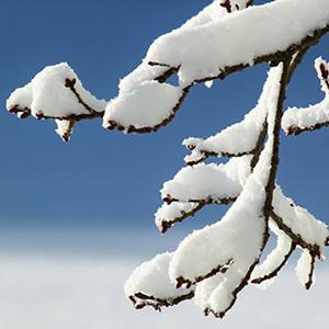 Naturpark Habichtswald pixabay Knospen Winter e1547546076874 Obstbaumschnitt für Anfänger