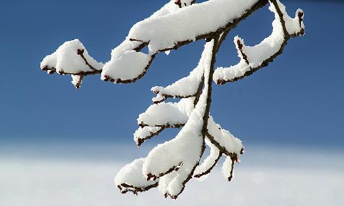 Naturpark Habichtswald pixabay Knospen Winter Dornröschenschlaf   Bäume im Winter