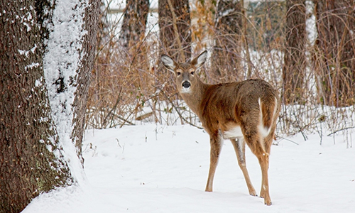 Naturpark Habichtswald pixabay Reh im Winter Naturerlebnisse im Winterwald – Auf Entdeckungstour in Schnee und Eis