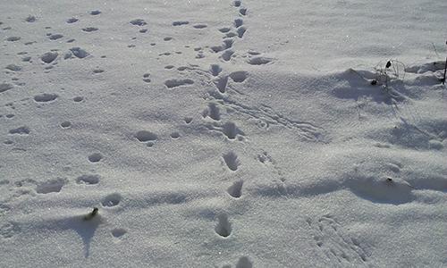 Naturpark Habichtswald pixabay SnowLane Ja, wer war denn das? – Spuren in Wald und Flur
