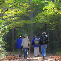 Naturpark Habichtswald pixabay Wanderer Waldbaden – Kraft und Energie durch Bäume