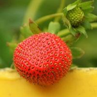 Naturpark Habichtswald_pixabay_strawberry-3392690_960_720