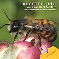 Plakat Wildbienen