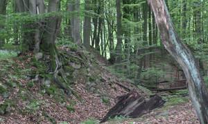 (C)Naturpark Habichtswald