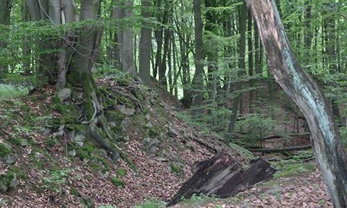 """Wald2 Das """"landschaftliche Auge"""" des Waldes"""