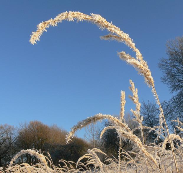 Winterliches Gras e1544090766515 620x585 Fotorundgang auf dem Dörnberg