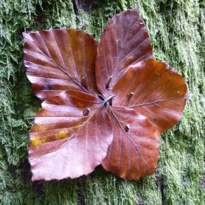 autumn-470448_1280