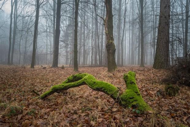 forest 316563 640 620x414 Zu Fuß durch die Erdgeschichte