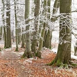 """sichelbachsteig r 029 e1544090065181 Im """"Hier und Jetzt"""" sein beim Waldbaden im Erlenloch/ Achtsamkeitswanderung"""